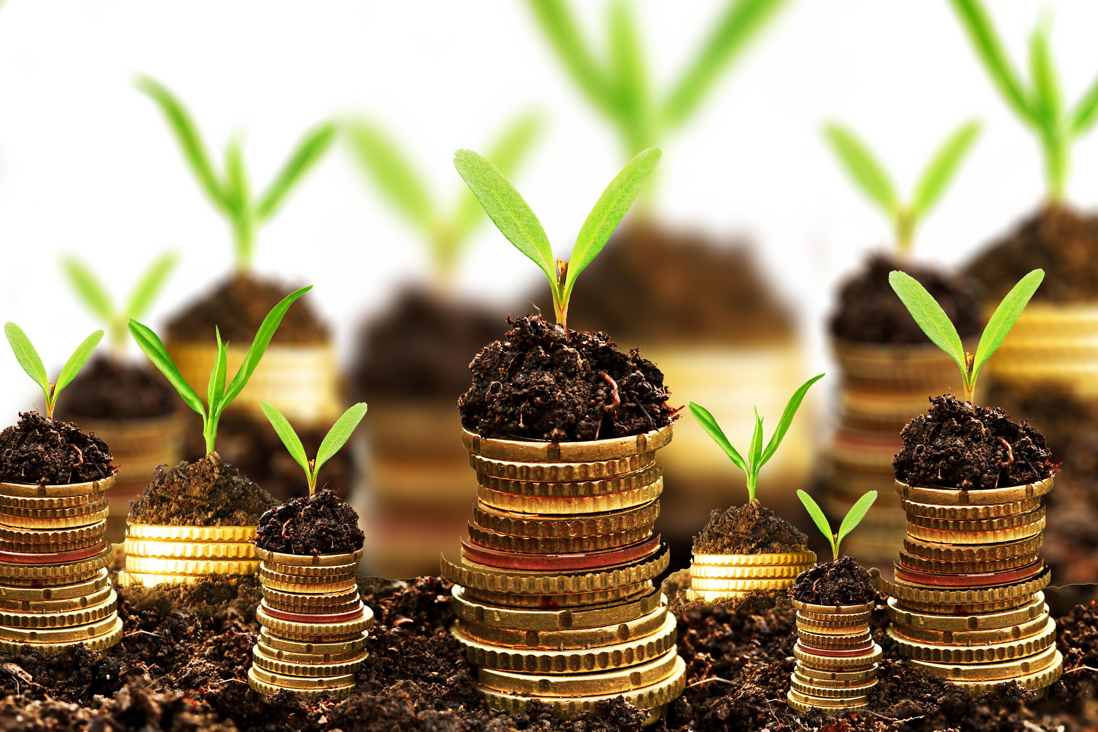 Money Growth Photo