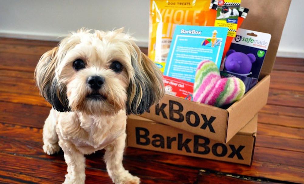 Image result for barkbox dog