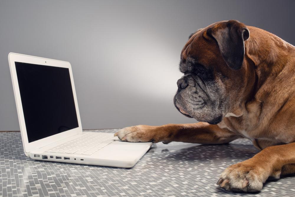 dog technology