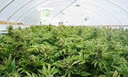 CanIDeal-ecommerce-marijuana-industry