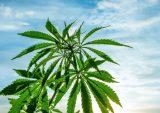 cronos-cannabis-altria-investment